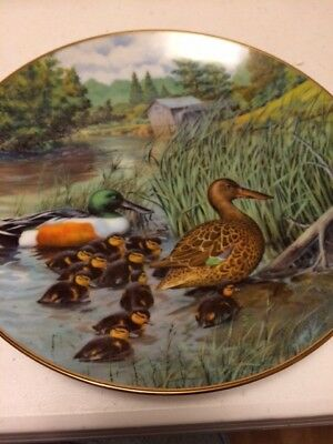 Knowles Living WIth Nature Collector Plate The Northern Shoveler Jerner's Ducks