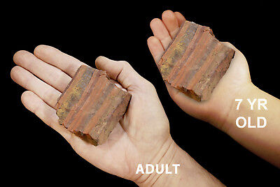 "Banded Red Jasper Hematite 2 1/2"" 8-14 Oz Rough Rock Mineral Specimen Raw Stone"