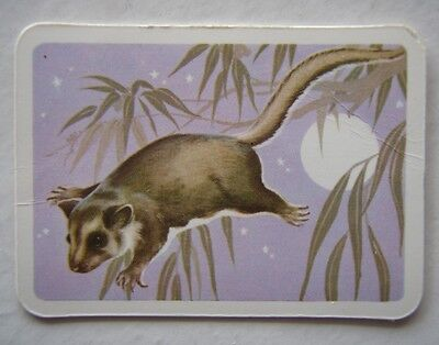 TUCKFIELDS AUSTRALIANA SERIES ANIMALS No. 15 THE PYGMY OR FEATHER-TAIL GLIDER