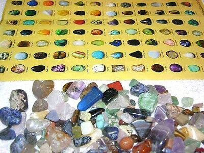 Rock & Mineral educational hunt sort & identify kit w/picture stones and chart