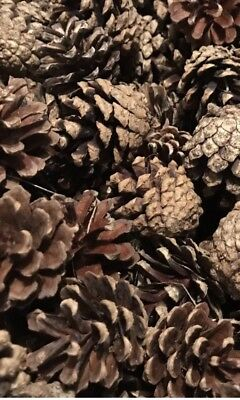 30 x Natural PINE CONES Wreaths Florist Christmas Crafts DIY Decorations Medium