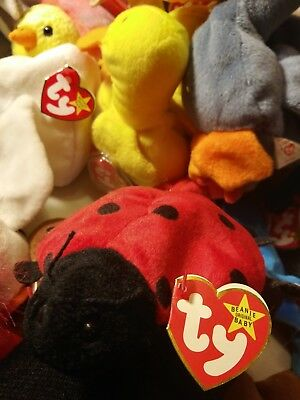 Ty Beanie babies Lucky Rare Retired w Tag Errors 1st Edition PVC MINT Best Gift!