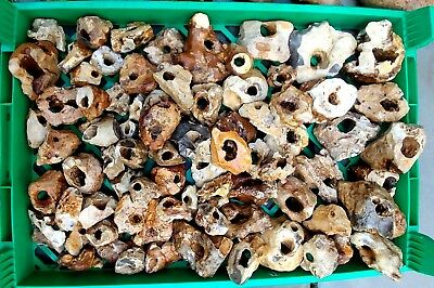 0.5 Kg Holey Holy Flint Assorted Hag Stones from Holy-Land Carmel Rock Ornament