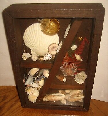 Sea Shell Collection Hanging Wooden Shadowbox - Beach - Ocean