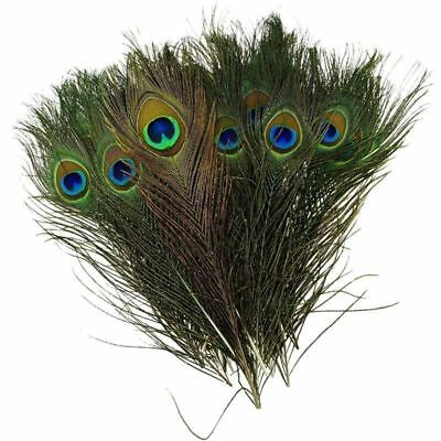 10Pcs Natural Peacock Tail Feathers Art Craft Wedding Party DIY Home Decor