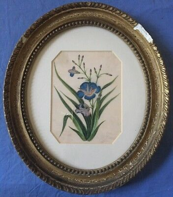 Antique Chinese Painting On Rice Paper Botanical Floral Mounted And Framed