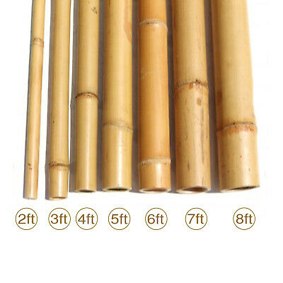 Strong Heavy Duty Bamboo Cane Plant Support Garden Canes | 2ft - 10ft Brand New