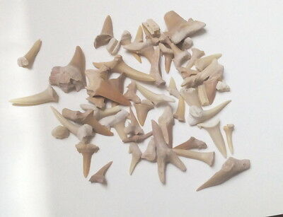 BWT-  Moroccan Fossil Shark Teeth Mixed bag, 1oz, Eocene period from Morocco