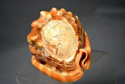 Fabulous  Vintage Carved Etched Cameo Lady Profile Shell Seashell Conch