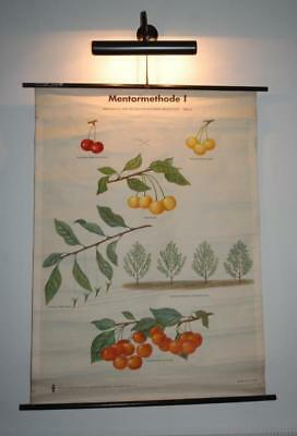 Vintage Canvas School Pull Down Chart / Decorative Wall Poster Genetics Cherry