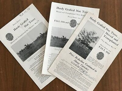 Lot Of 3 Hardy Grafted Nut Trees Price Sheets Hershey Nurseries Downingtown PA
