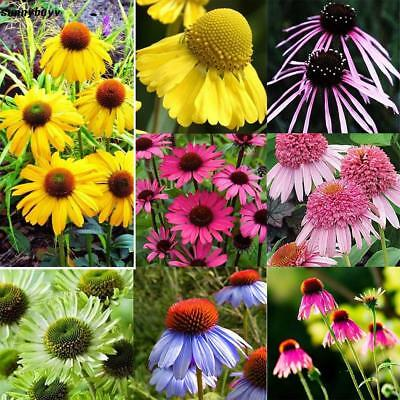 New Nice Adorable Flower Fragrant Blooms Echinacea Chrysanthemum Seeds RR3