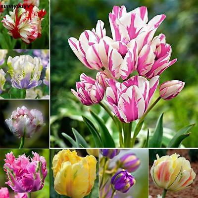 New Nice Adorable Flower Fragrant Seeds Fragrant Blooms Tulip Seeds RR3