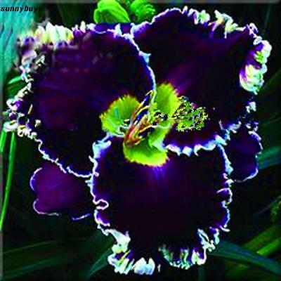 20/30/50 PCS Hibiscus Flower Seeds Bonsai House Garden Outdoor DIY Plants RR3