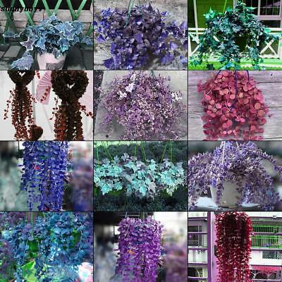 Rare Ivy Flower Seeds Garden Potted Air Purification for Wedding Party RR3