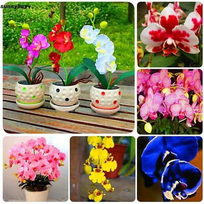New Nice Adorable Flower Seeds Fragrant Blooms Orchid Seeds RR3