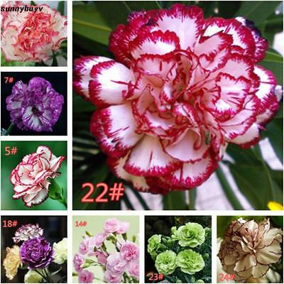 50Pcs Home Gardening Balcony Potted Mixed Carnation Flower Seeds RR3