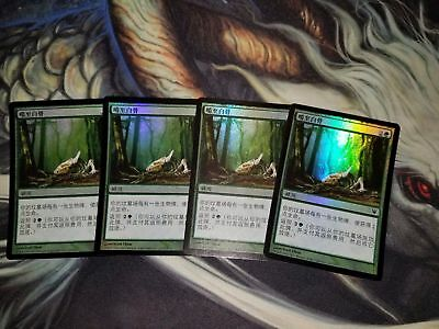 4 FOIL Chinese Gnaw to the Bone Innistrad ISD MTG Magic the Gathering MINT