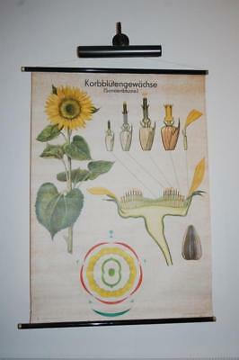 Vintage Retro School Pull Down Chart / Decorative Wall Poster /  Sunflower 1970