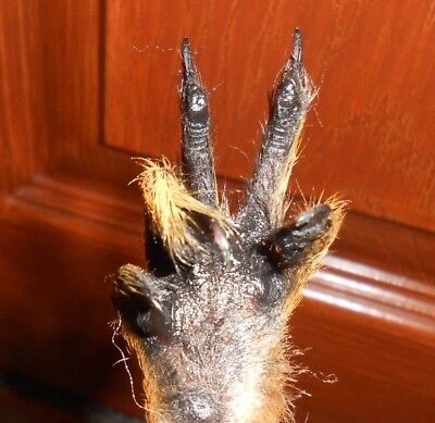 Squirrel Taxidermy Arm Peace Sign Paw Weird White Elephant Gag Gift