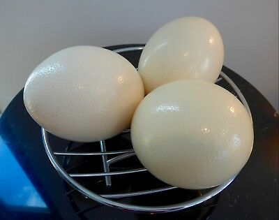 Ostrich Eggs - 3 Large Hollow (single hole) Real - Stand Not Included