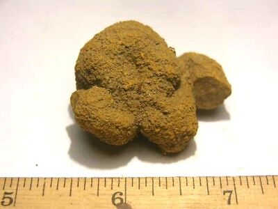 Coprolite real fossil Dinosaur dung from Madagascar,Africa dino poo eo50
