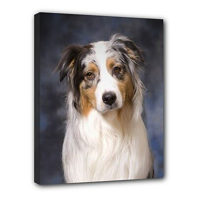 AUSTRALIAN SHEPHERD CANVAS PRINT Aussie Dog Art Portrait Framed Home Decor Gifts