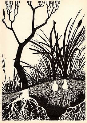 "Original Don Blanding Art Deco Vintage Print 1953 ""Roots"""