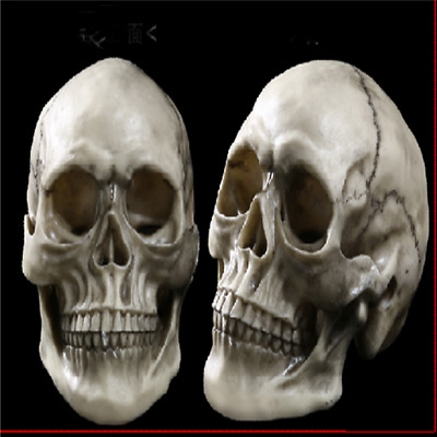 Realistic Retro Human Skull Replica 1:1 Resin Model Medical Art Teach Life Size