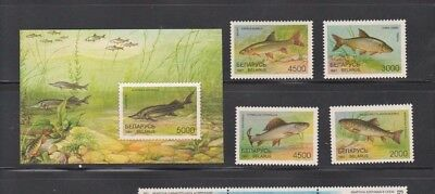BELARUS  1997  MNH  SC= 204 - 208   4 st  and  SS   FISH