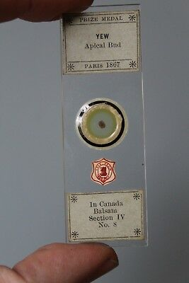"""Fine Victorian Botanical Microscope Slide """"yew Bud Cross Section"""" By Cole"""