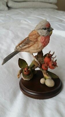 Country Artists Broadway Birds Linnet with Rose Seed Pods in original box