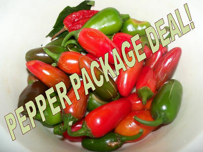 6x VARIETIES CHILLI PEPPER SEEDS COLLECTION, JALAPENO CAYENNE CHILLI WILLY ETC