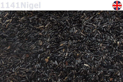 Premium Nyger Niger Seed High Energy Protein Wild Bird Food
