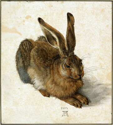 Albrecht Durer Hare Giclee Art Paper Print Paintings Poster Reproduction