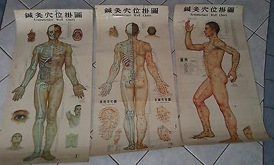 Chinese Acupucture - Human Body - 3 large laminated posters