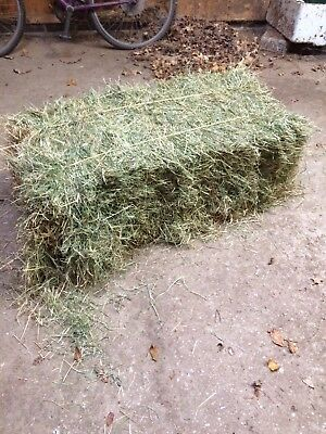 Conventional hay bales,horse,animal feed