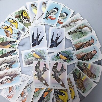 2 Sets Arm & Hammer Useful Birds Of America 30 Trade Cards 10th Series 1938