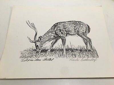 Charles Beckendorf.  AXIS DEER- CHITAL Limited Signed 11x14 Print