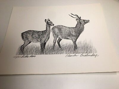 Charles Beckendorf.  SIKA DEER Limited Signed 11x14 Print