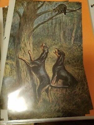 SINGLE Edwin Megargee Black & Tan coonhound bookplate 1958 National Geographic