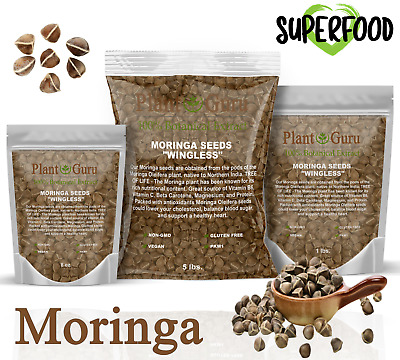 Moringa Oleifera Seeds Organic Semillas de Moringa Bulk Wholesale U CHOOSE SIZE