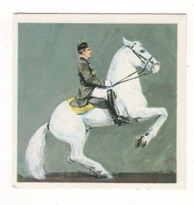 Horses in the Service of Man Trade Card - Lippizaners