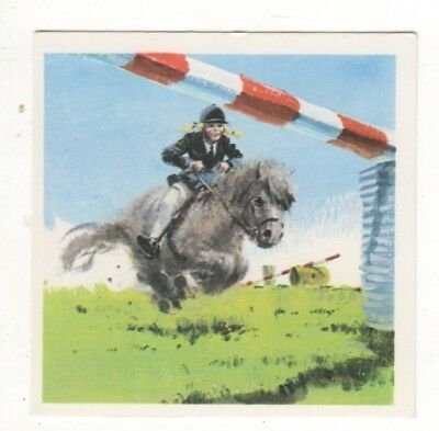 Horses in the Service of Man Trade Card - Shetland Pony