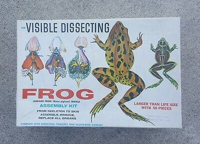 VINTAGE 1970's VISIBLE DISSECTING FROG MODEL 100% COMPLETE SCIENCE LEARNING TOOL