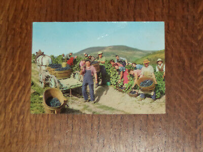 CPA VENDANGES beaujolaises HOUYET carte postale ancienne cp pk hour- havenne