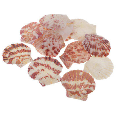 15pcs Natural Sea Shells Seashell for Jewelry Making Craft Making 2.5-4.3cm