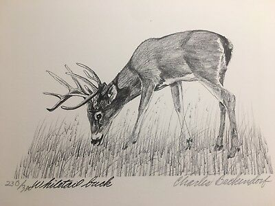 Charles Beckendorf. WHITETAIL BUCK Limited Signed 11x14 Print