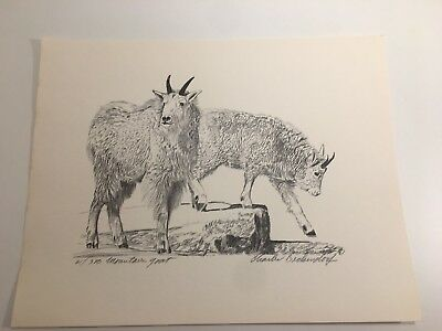 Charles Beckendorf. MOUNTAIN GOAT Limited Signed. 11x14 Print