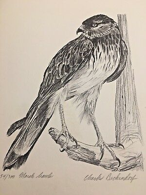 Charles Beckendorf. MARCH HAWK Limited Signed 11x14 Print